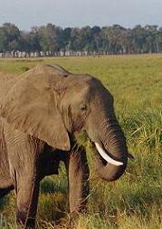 Elephant | by Shelley Harrison